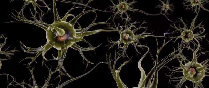 neuronai smegenu jungtys
